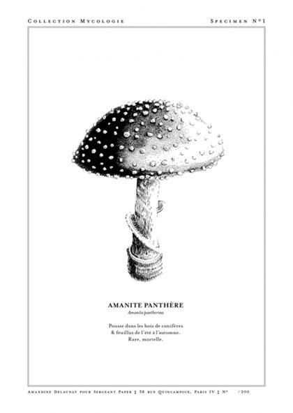 Amandine Delaunay - Amanite Panthère