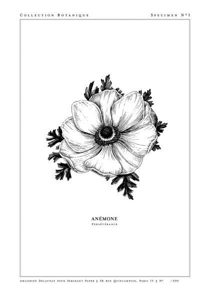 Amandine Delaunay - Anémone