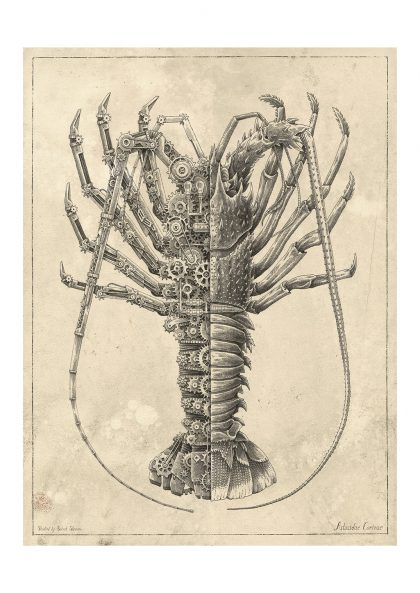 Steeven Salvat - Astacidae