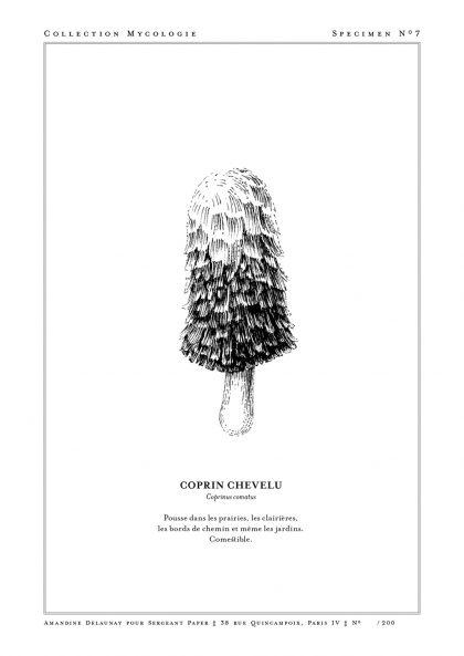 Amandine Delaunay - Coprin Chevelu