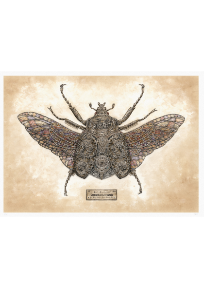 Steeven Salvat - Goldiathus Lestourgis