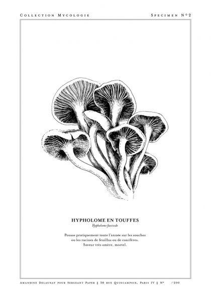 Amandine Delaunay - Hypholome en touffes