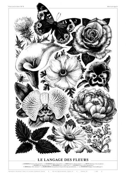 Amandine Delaunay - Le langage des fleurs