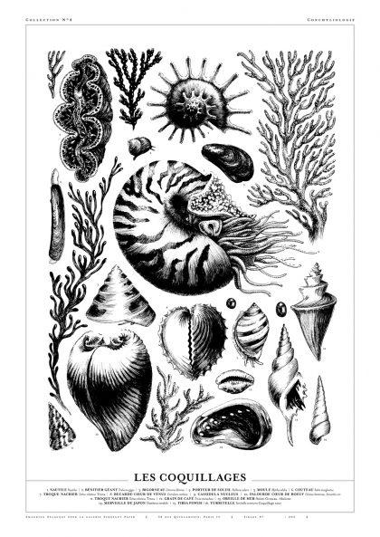 Amandine Delaunay - Les coquillages