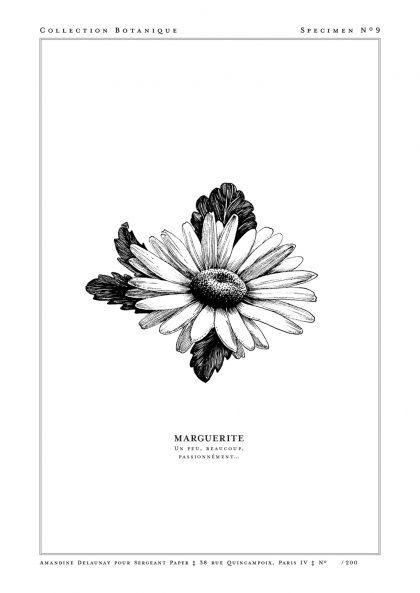 Amandine Delaunay - Marguerite