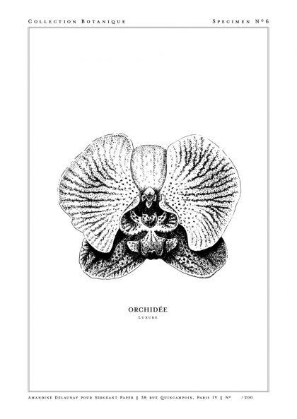 Amandine Delaunay - Orchidée