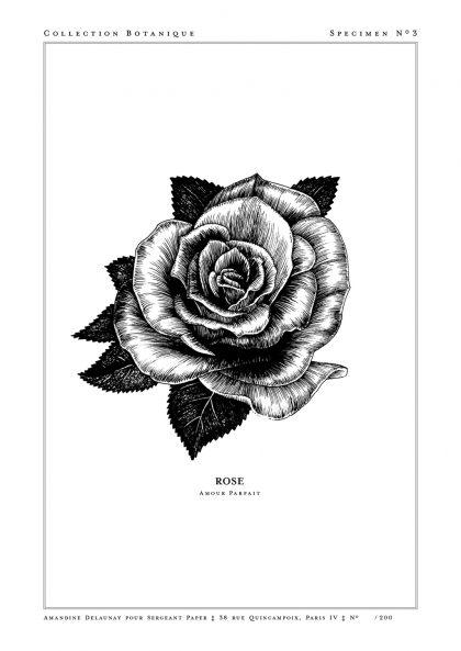 Amandine Delaunay - Rose