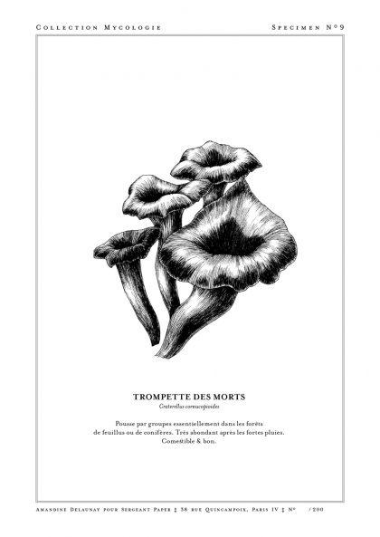 Amandine Delaunay - Trompette des morts